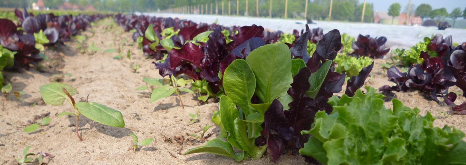Salat 194